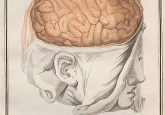 Brain - d'azyr